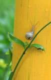 Snail macro Stock Images
