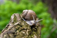 Snail - macrophotography royalty free stock photography