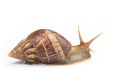 Snail macros  3 Stock Image