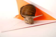 Snail Mail Closeup. Snail and mail envelope closeup Stock Photography