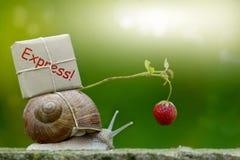 Snail mail, Schnecke mit Paket auf dem Schneckenhaus Stockfoto