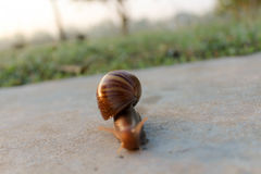 The Snail man in the park Stock Photography