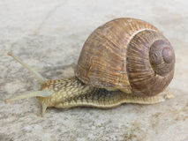 Snail in the marble tiles Royalty Free Stock Image