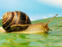 Snail on a meadow. Over blue sky Royalty Free Stock Photos