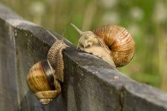 Snail meeting stock image