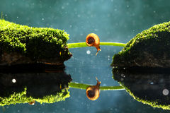 Snail mirror. Snail crossing branches with bokeh Stock Image