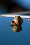 Snail in a mirror Stock Image