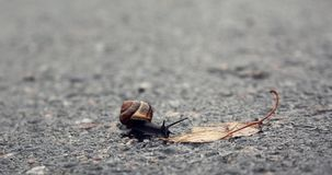 Snail on a Mission. A small snail peacefully moves towards a fallen autumn leaf Royalty Free Stock Photo