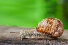 Snail Mobile sweet Home Royalty Free Stock Photos