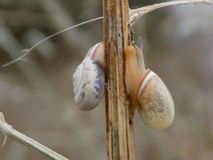 Snail. Molluscs from class representatives gastropods which have spiral shell Stock Photo