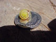 Snail mollusk slug coin Royalty Free Stock Photo