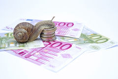 Snail on moneys Stock Images