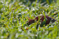 Snail morning feeding. Stock Image