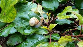 Snail in a Moroccan garden Royalty Free Stock Images