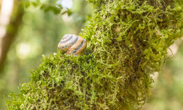Snail and MOSS Stock Image