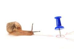 Snail in mot målet. Arkivbild