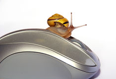 Snail and Mouse Royalty Free Stock Photos
