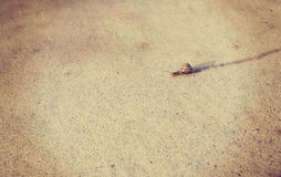 Snail moving along sidewalk with instagram filter Stock Images