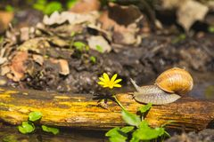 Snail above water on branch Stock Photography