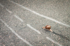 Snail moving its own way Stock Photo