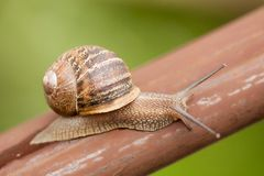 Snail moving slowly Stock Photos