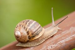 Snail moving slowly Stock Image