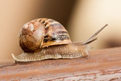 Snail moving slowly Stock Photo