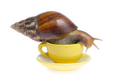 Snail on mug Royalty Free Stock Photos