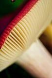 Snail and Mushroom Stock Photo