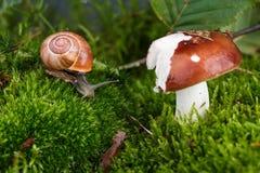 Snail and Mushroom Stock Photos