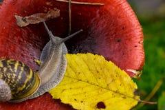 Snail and Mushroom Royalty Free Stock Photos