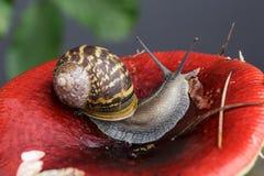 Snail and Mushroom Stock Image