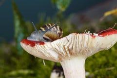 Snail and Mushroom Stock Photography