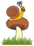 Snail and Mushroom Stock Images