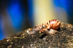 Snail in nature Stock Image