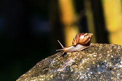 Snail in nature Stock Images