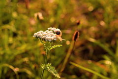 The snail, nature macro Royalty Free Stock Photos