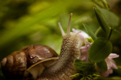 Snail. Nature photo of snail. Soft and calm. Nice detail Stock Photos