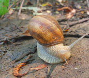 Snail and nature Stock Photography
