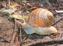 Snail and nature 2 Royalty Free Stock Photos
