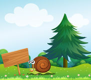 A snail near the wooden signboard Royalty Free Stock Photography