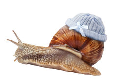Snail with Newborn baby knit wool hat Stock Images