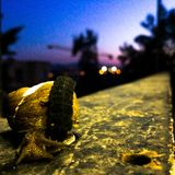 Snail at night Royalty Free Stock Photography