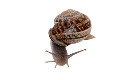 Snail Number 3 Stock Image