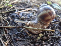 Snail and obstacle Stock Photo
