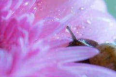 Snail och blomma royaltyfri foto