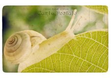 Snail. Old postcard Stock Image