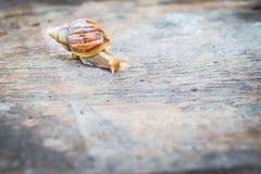 Snail on old wooden table. Snail on old wooden table, at the garden Royalty Free Stock Photos