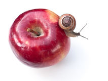 Free Snail On Apple Royalty Free Stock Photo - 9932805