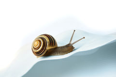 Snail On The Fast Track Royalty Free Stock Photography